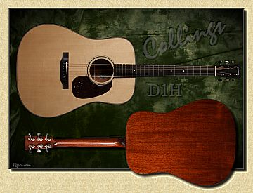 Collings_D1H_sml