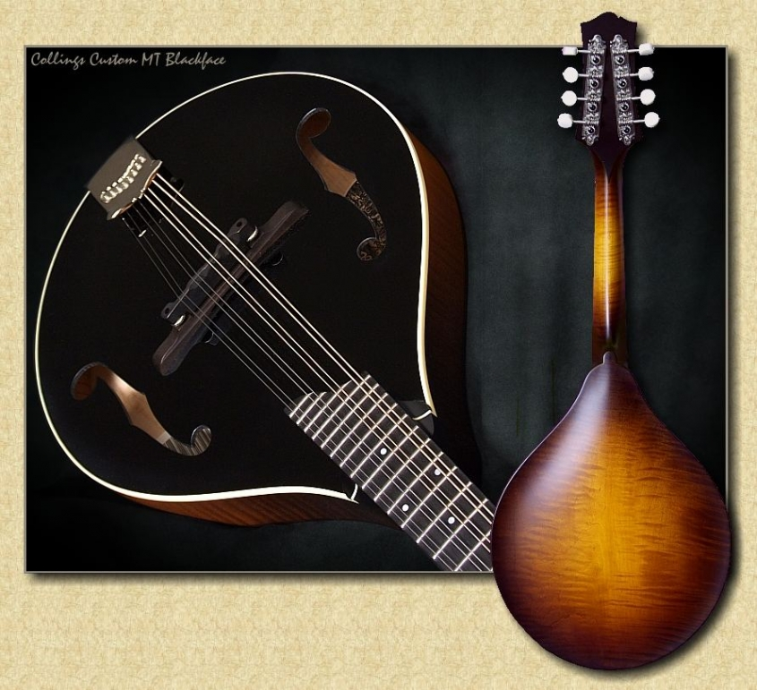 Collings_MT_Blackface_mandolin_Mch8