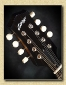 Collings_MT_Blackface_mandolin_Mch8b