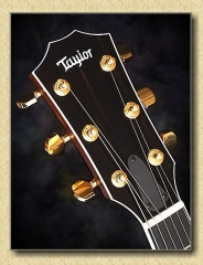 Taylor_T5_C1_guitar_b