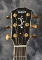 Taylor_Walnut_LTDs_Headstock